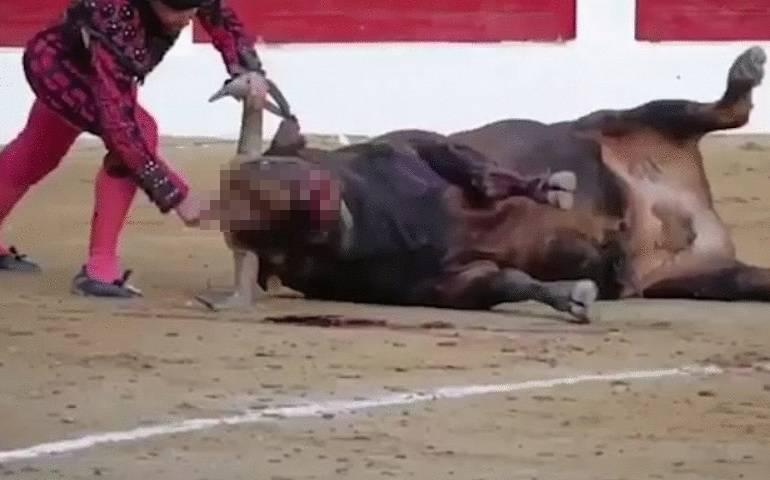 Nožem ubio bika: 'Oštricu punu krvi obrisao je  licemživotinje...'
