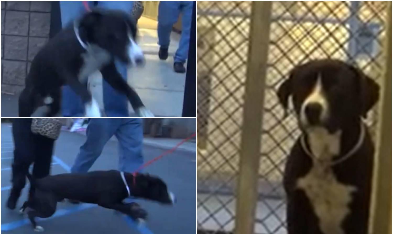 Preslatko: Snimili trenutak kad je pas shvatio da je udomljen