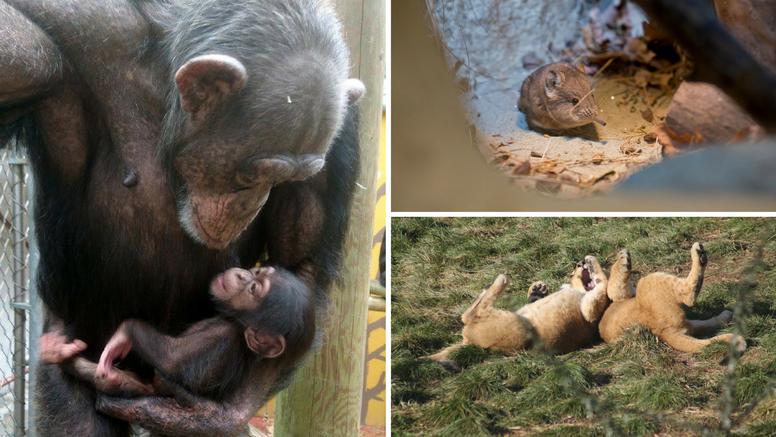 U ZOO-u  u Zagrebu na svijet došlo više od 600 životinja...
