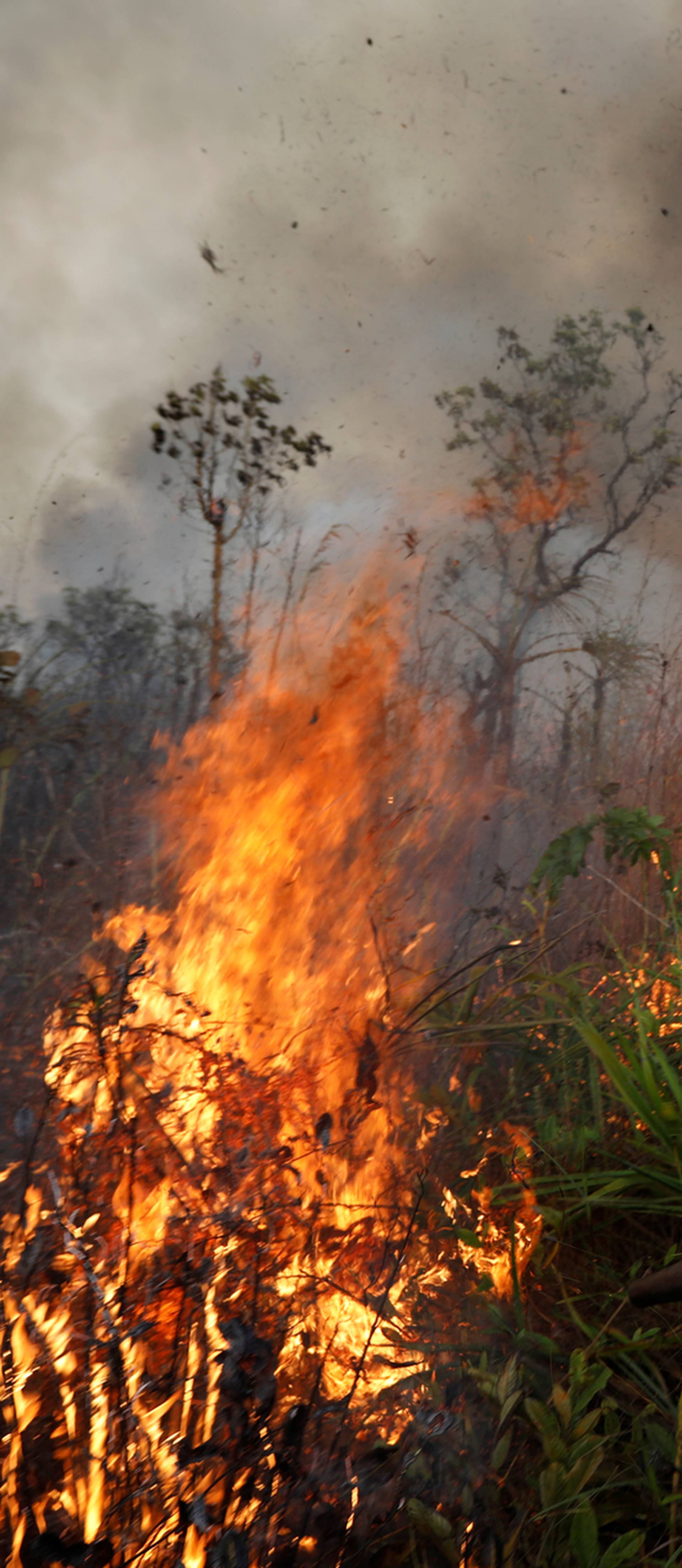 Požari neviđenih razmjera već mjesecima bijesne u Pantanalu