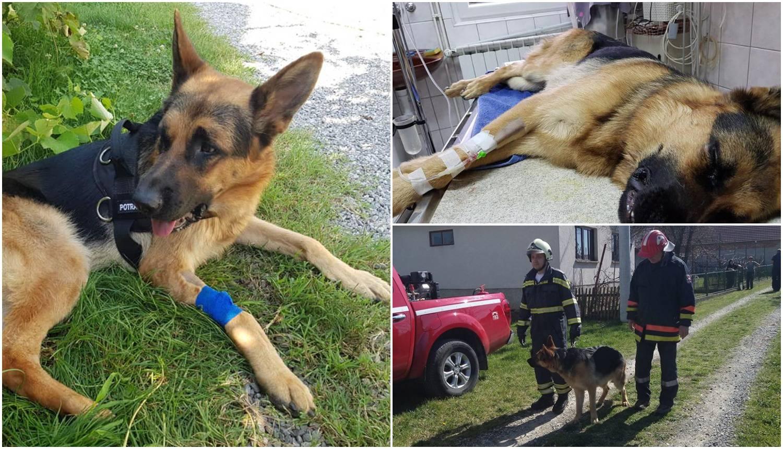 Oporavlja se vatrogaščev pas Rex: Iznenadio je i veterinara