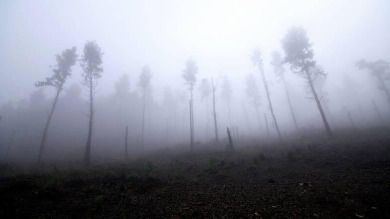 Gotovo trećina od 60.000 vrsta drveća na svijetu u opasnosti je od izumiranja, nekih je tek 50