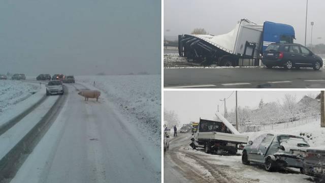Kaotično na cestama: Nesreće, zastoji i jedna odbjegla svinja...
