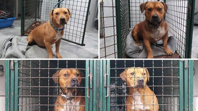 Detalji užasne priče iz Zagreba: Ovo su psi koji su napali ženu (75) dok je šetala svog psa