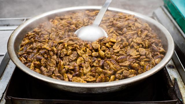 Uskoro i na vašem stolu - crvići: Europska unija odobrila prodaju crva brašnara za prehranu ljudi