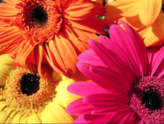Ne budi klišej za Valentinovo! Pokloni cvijeće koje nisu ruže