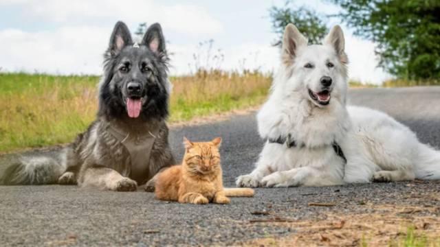 Psi su spašenoj mački postali najbolji prijatelji, zajedno šeću