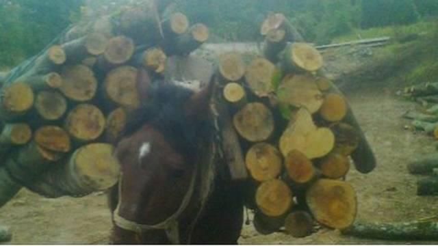 Sramota: Konje ste pretvorili u robove za vuču drva s Marjana