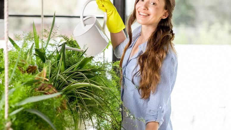 Biljke koje čiste zrak u vašoj kući: Aloe vera, areka palma...