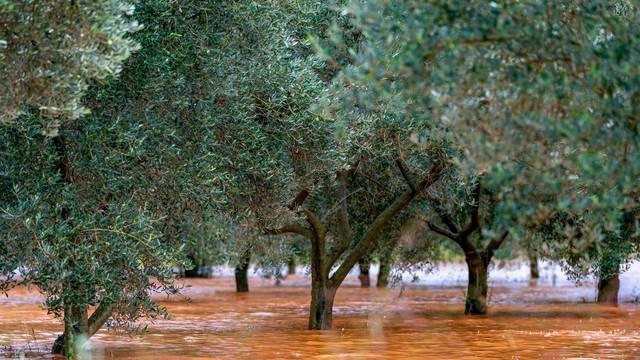 Obilna kiša u Istri uzrokovala  je poteškoće u prometu te su poplavljeni maslinici i vinogradi