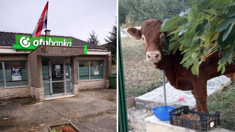 Odbjegli bankar Srđo u Vrlici ima više navijača nego Hajduk