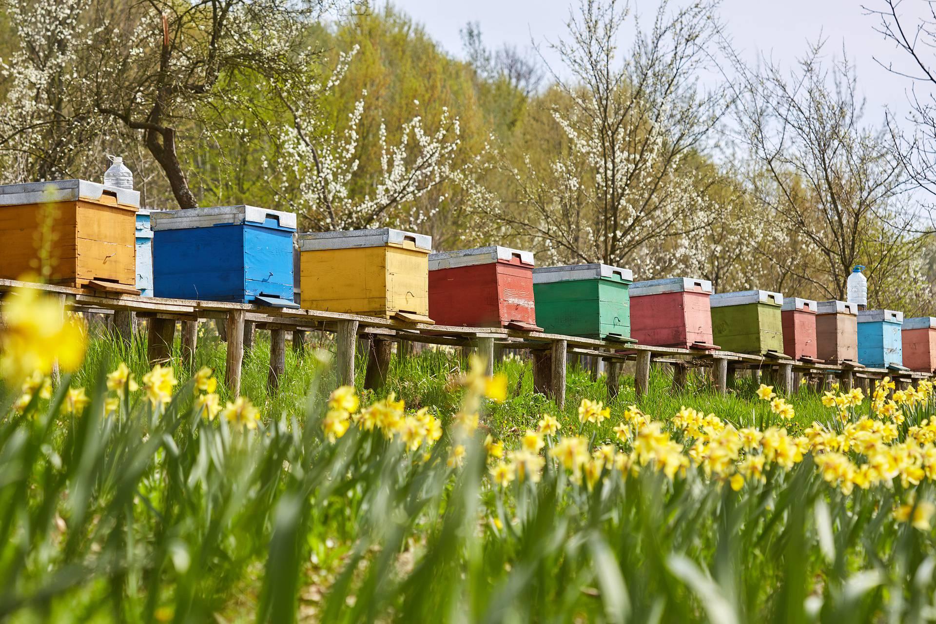 'Nestanu li pčele s planeta Zemlje, čovjeku kao vrsti ostaje oko četiri godine života'