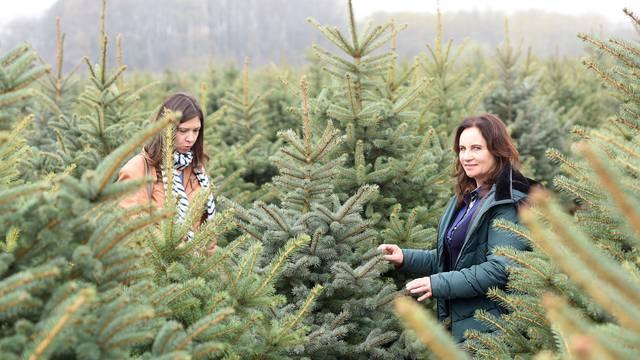 Gdje kupiti drvce? Domaća već od 20 kn, uvozna se brzo suše