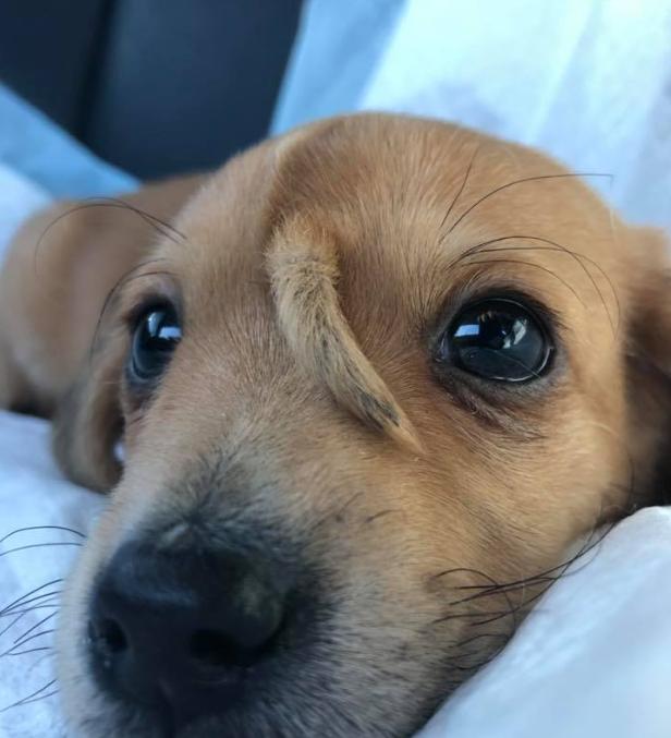 Spasioci pronašli psa kojem rep raste iz glave: Svi ga obožavaju
