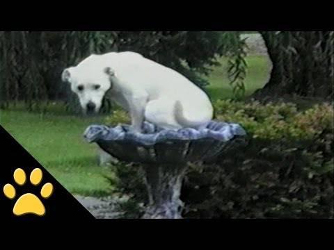 YouTube/AFV Animals