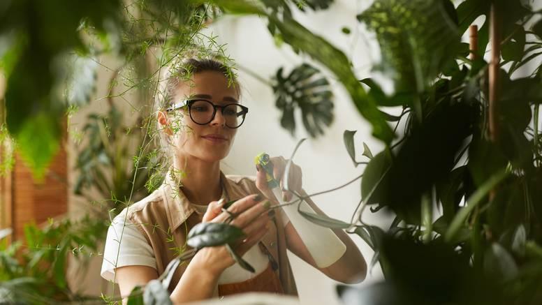 5 trikova kako čistiti sobno bilje
