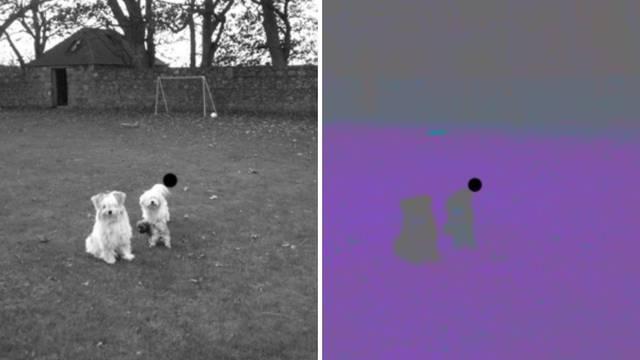Crnobijela fotografija dva psića. Jeste li sigurni da je crnobijela? Gledajte u točku 15 sekundi...