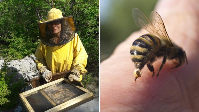 Ispovijest novinarke: 'Pčele me bodu svaki dan i to me spašava'