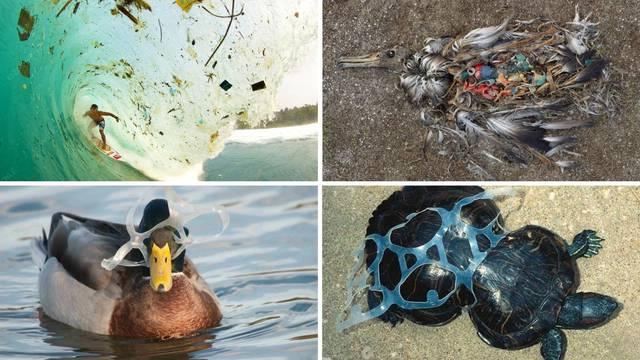 Grozni prizori: Ovako odbačene plastične boce štete životinjama