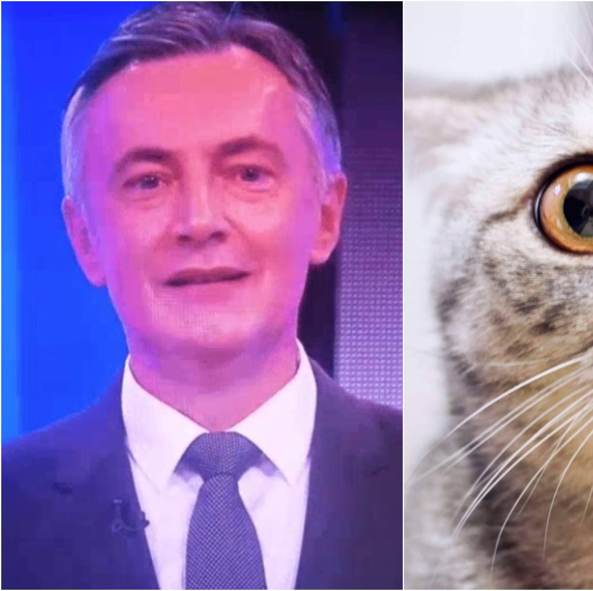 Škoro, preplašena mačka: Kako bi kandidati izgledali kao mace