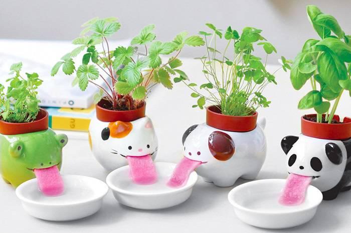 Ideje kako da biljke u teglama uzimaju vode koliko im treba
