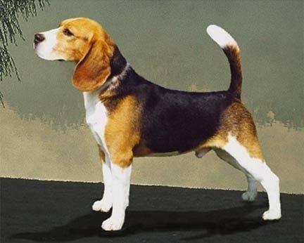 Dog Informat