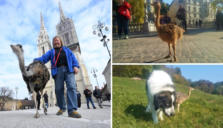 Franci je zvijezda u Sloveniji, a obožava banane, jaja i kekse