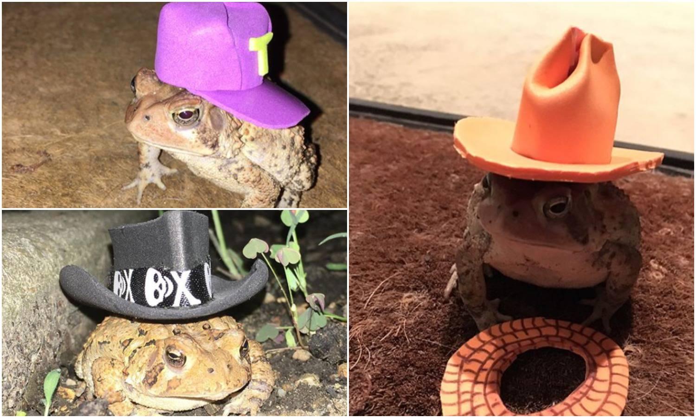 Nevjerojatan model: Žaba mu dolazi na trijem, a on ju 'fotka'