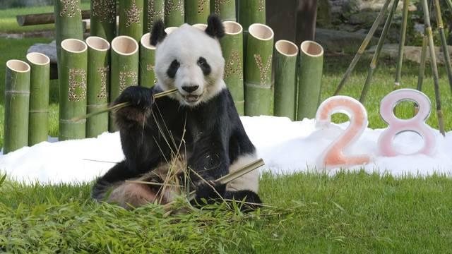 28th birthday of giant panda at western Japan zoo
