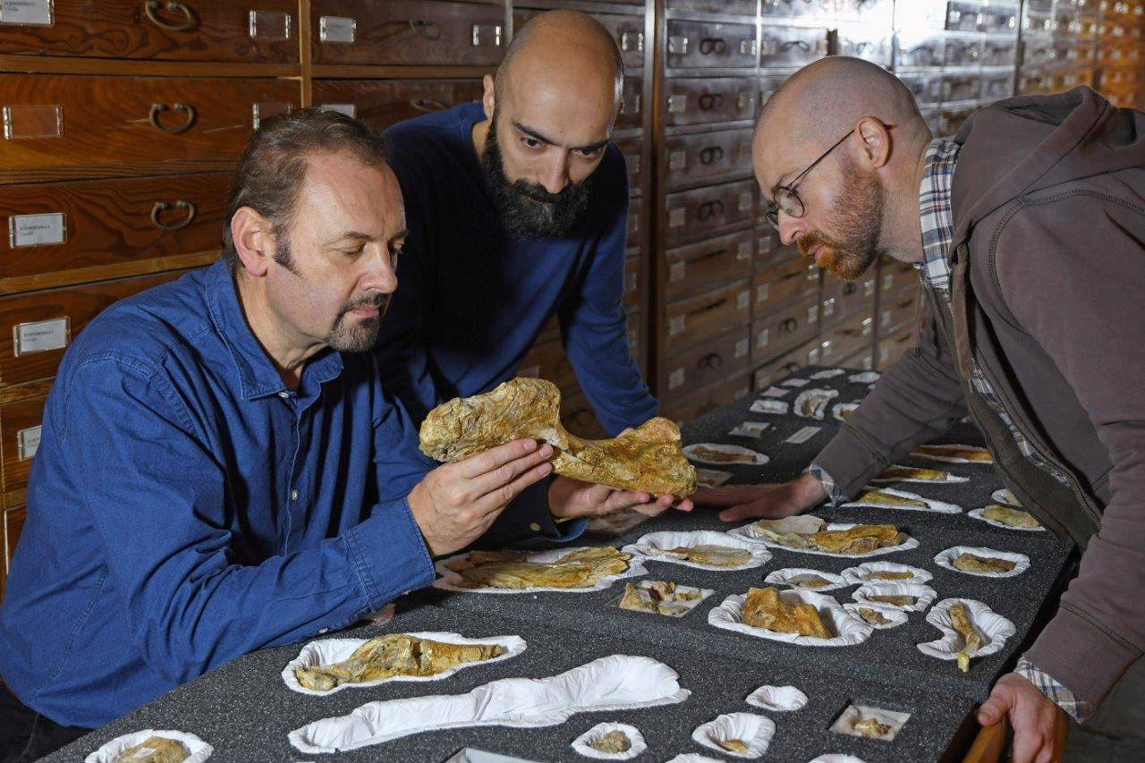 Paleontologist Cristiano Dal Sasso and co-authors Simone Maganuco and Andrea Cau examine the bones of the Jurassic dinosaur Saltriovenator, at the Natural History Museum of Milan, deposited in the Museum collections in this undated handout photo