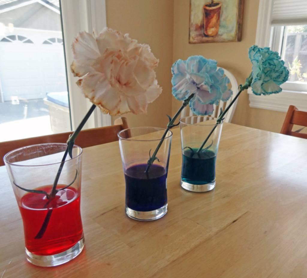 Pokus: Promijeni cvijetu boju u koju god želiš