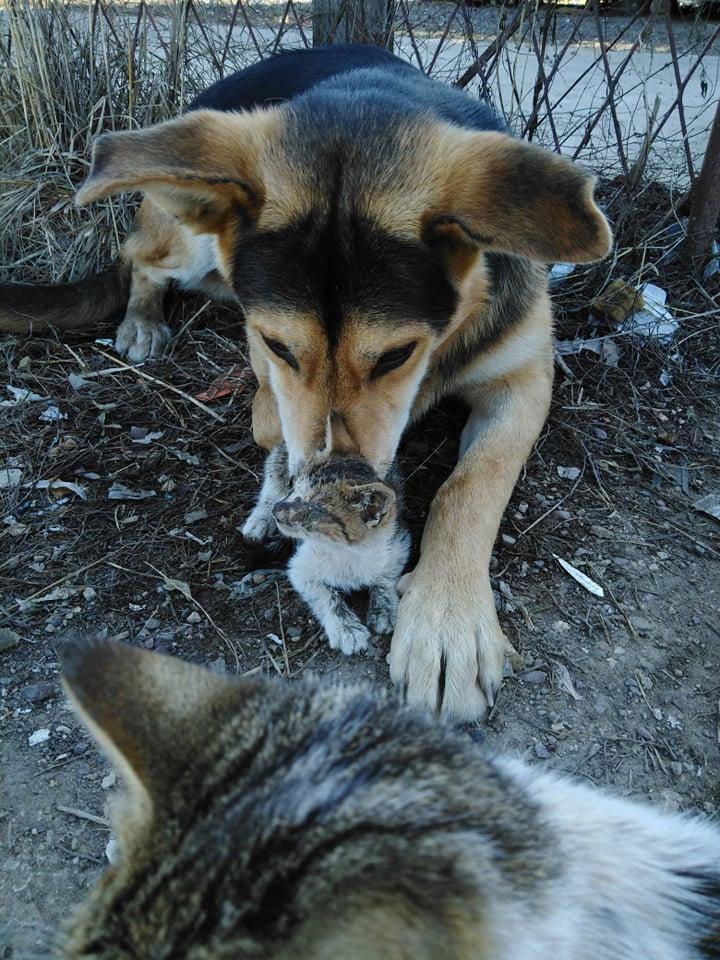'Uzmite nas skupa': Lesi i Tom sada su zajedno u skloništu