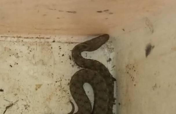 Semafor u Zagrebu nije radio, u njemu pronašli malu zmiju