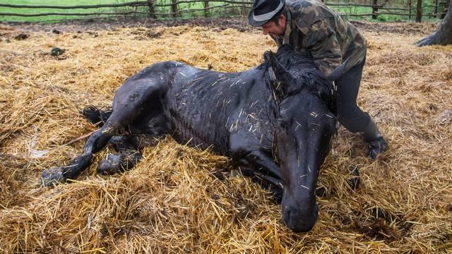 'Neutješni smo, uginulo nam je osam kobila i dva ždrebeta...'