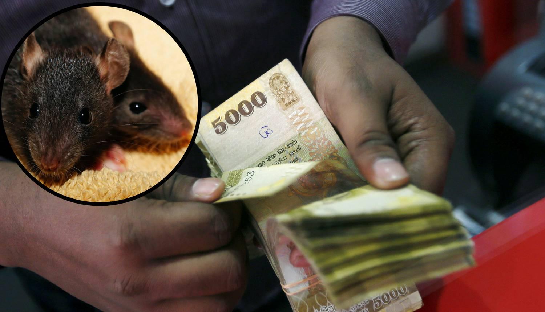 U bankomat ušli štakori pa su 'popapali' oko 100 tisuća kuna
