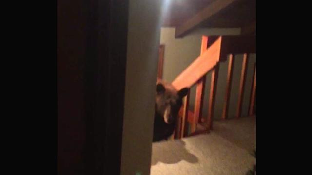 Neobični cimeri: U kuću mu se uselila cijela obitelj medvjeda