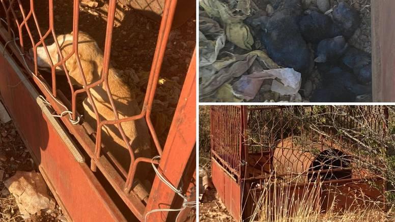 Drže kujicu u kavezu na suncu bez hrane i vode: 'Uginuli su joj svi štenci, a ona sjedi u izmetu'