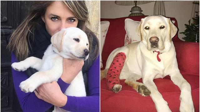 Amazonov dostavljač lupio je kombijem psa Elizabeth Hurley