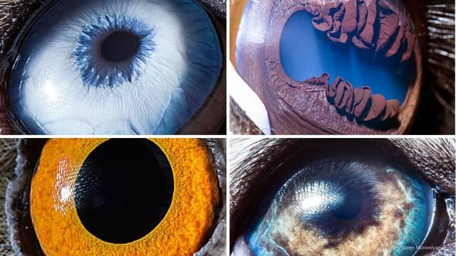 Fotografira oči životinja: Poput vlastitog planeta ili oceana su