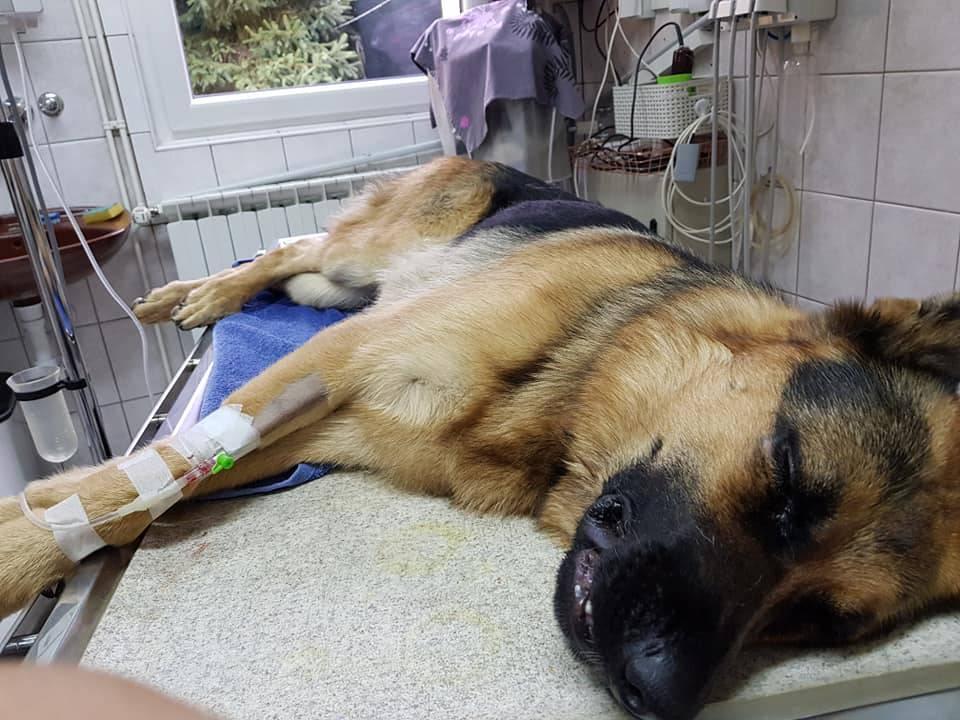 Rex je dobio nekoliko injekcija, ne znamo kada će se oporaviti