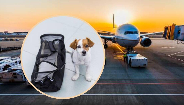Putujete sa psom zrakoplovom? Što sve trebate znati i napraviti