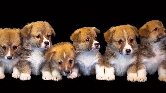 U Pakracu daju 1000, u Otoku 3000 kuna za psa iz skloništa