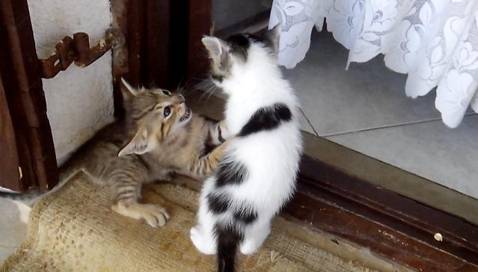 Maca Tigrica iz Konavla pravi je hit: Svi mačići su druge boje