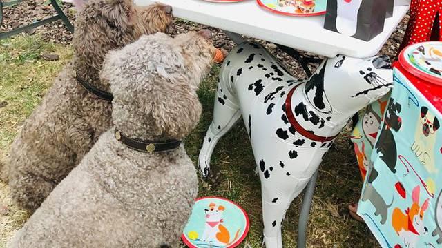 Zarađuje organizirajući zabave za pse i njihove pseće prijatelje