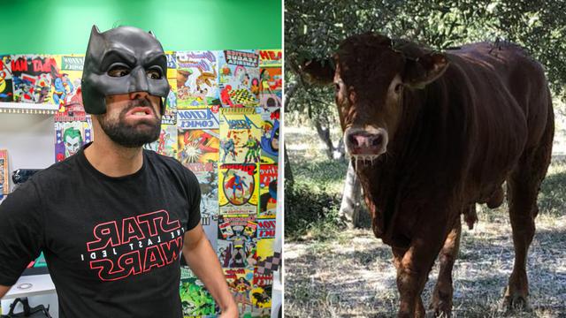 Ivan Šarić o biku Jerryju: On je stoka koja je odlučila biti heroj