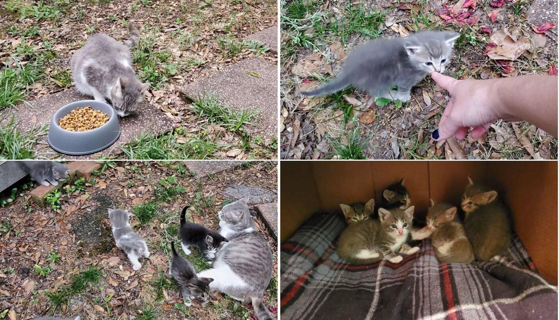 Počela je hraniti mačku, a onda je otkrila njenu prekrasnu tajnu