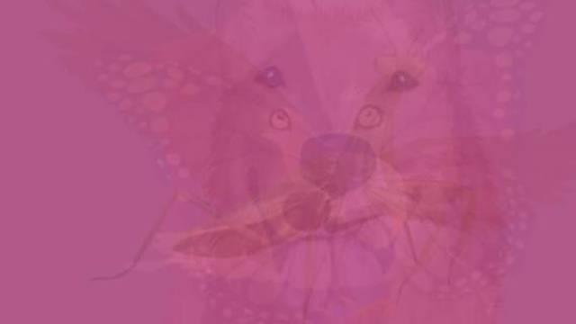 Koju životinju prvu vidite na slici? To otkriva vašu dušu...