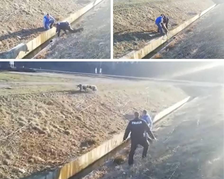 """Video: """"Psi su zapeli u kanalu. Bili su već na izmaku snaga..."""""""