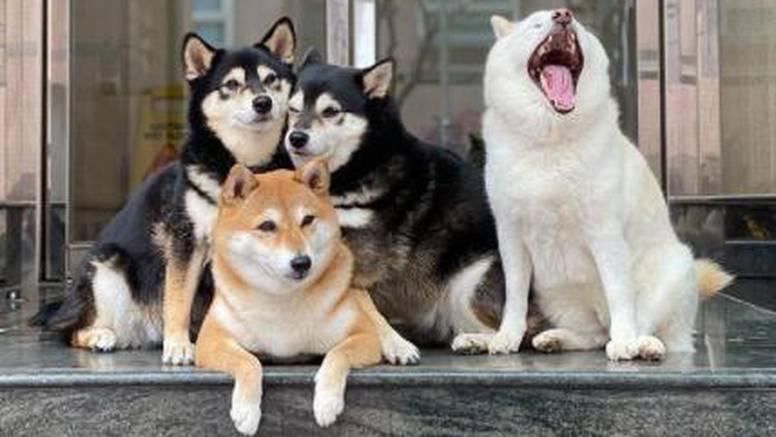 Ovaj pas 'pokvari' svaku sliku: Dok svi poziraju, ona se glupira