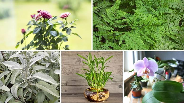 Osam biljaka koje donose sreću